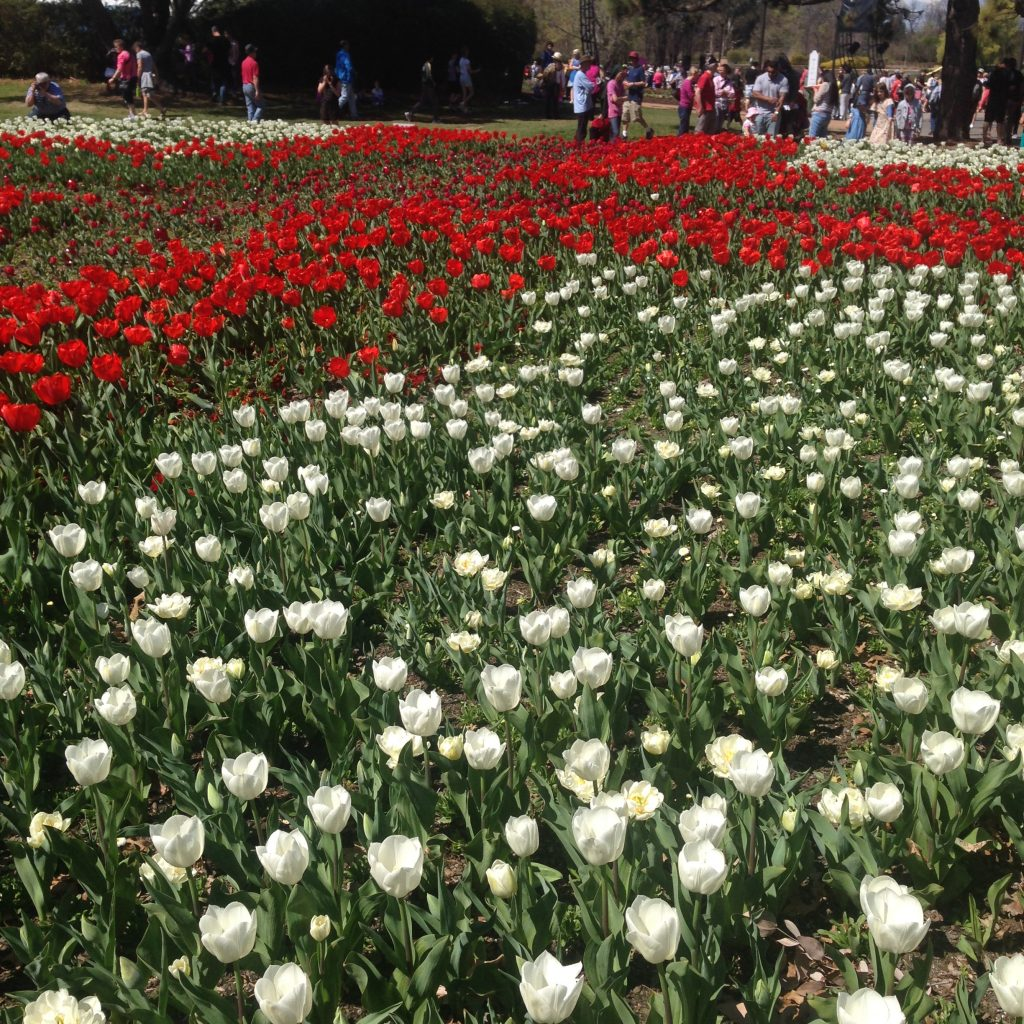 Floriade in Canberra- it's free!